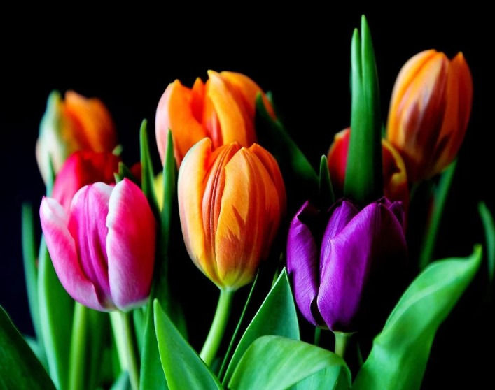 top flower producing countries