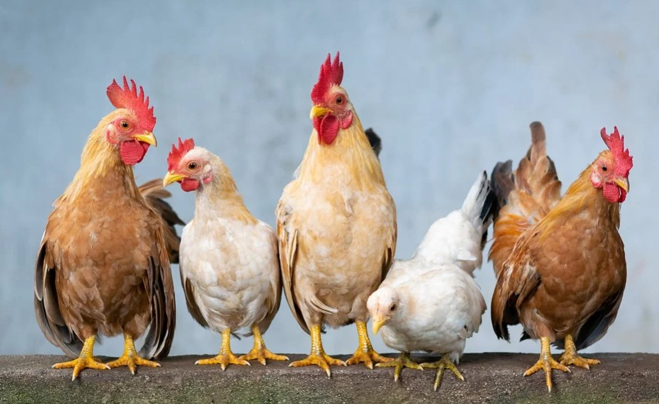 top poultry meat producing countries